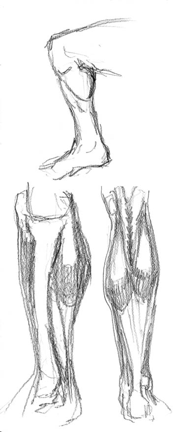 Spartan Camp #17 - 50 gestures + Optional Study of the lower leg